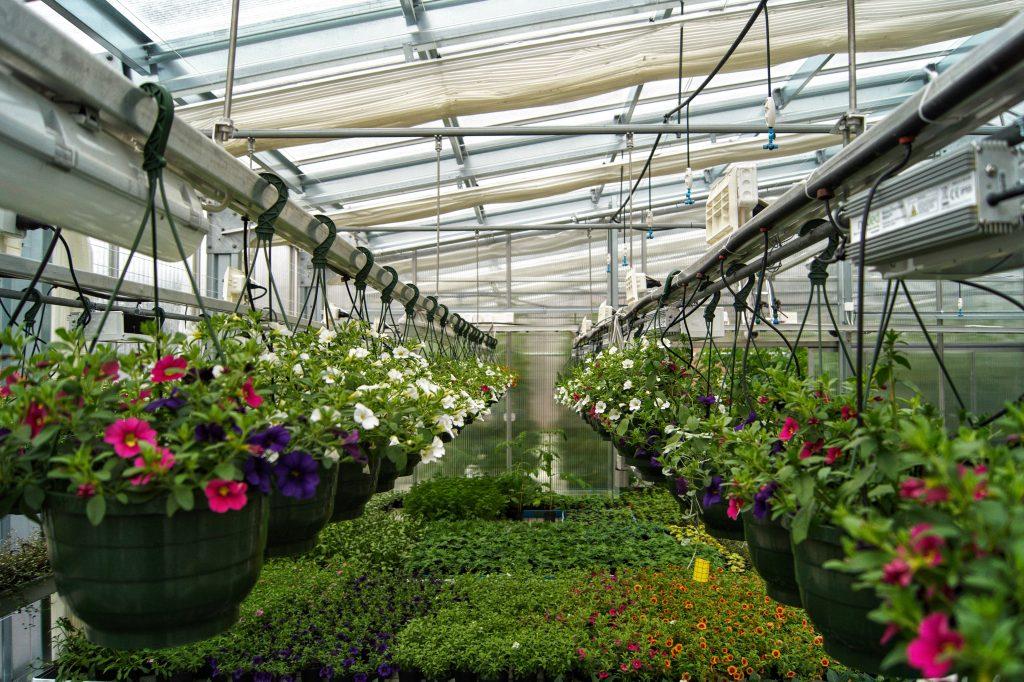 Opetuskasvihuoneen kukkia