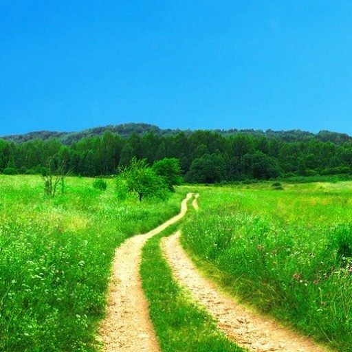 polku vihreällä niityllä