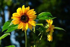 flower-1617202__180
